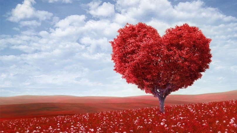Hoje é o Happy Valentine's Day (Dia dos Namorados dos EUA) 6