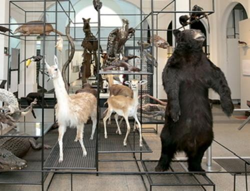 Museu de Zoologia da Universidade de São Paulo inaugura tour virtual 360 graus