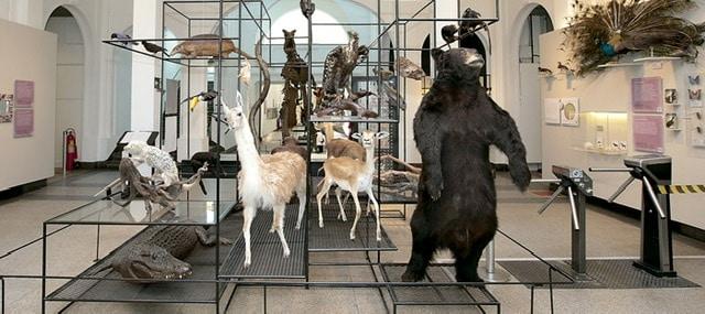 Museu de Zoologia da Universidade de São Paulo inaugura tour virtual 360 graus 6